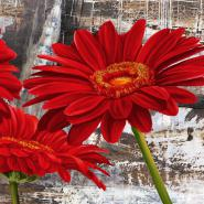 Red Gerberas II