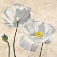 Poppies in White I