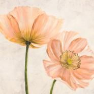 Poppies in Pink II