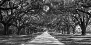 Tree lined plantation entrance, South Carolina