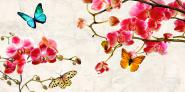 Orchids & Butterflies