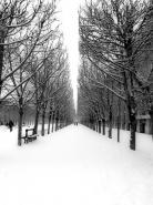 The Tuileries Garden under the snow, Paris